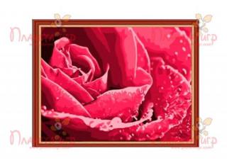Раскраска по номерам. Роса на розе (40х50)