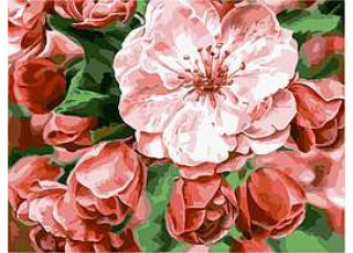 Раскраска по номерам Бархатные цветы (40х50)