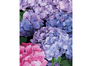 Раскраска по номерам Цветущая гортензия (40х50)