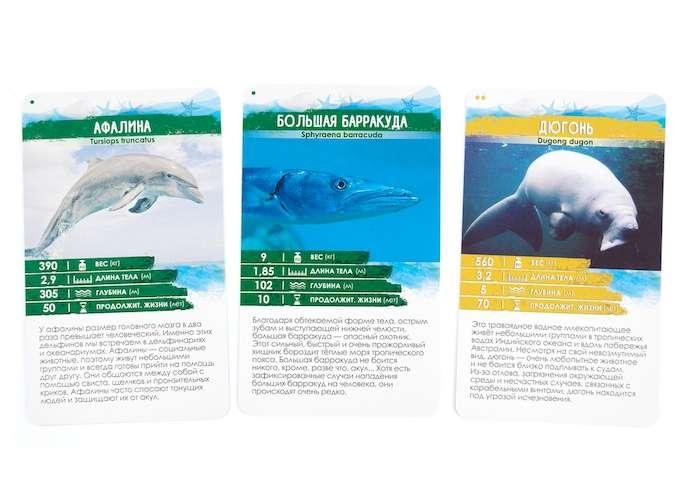 Секреты планеты. Морские обитатели: карточки